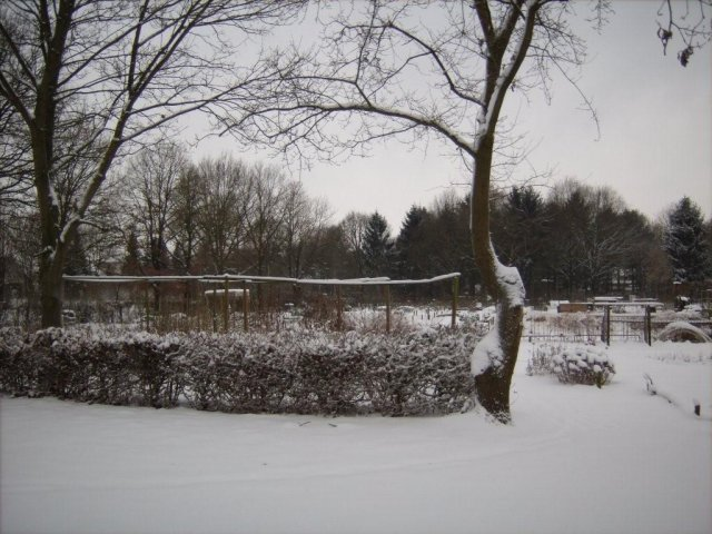 Tuin in de Winter